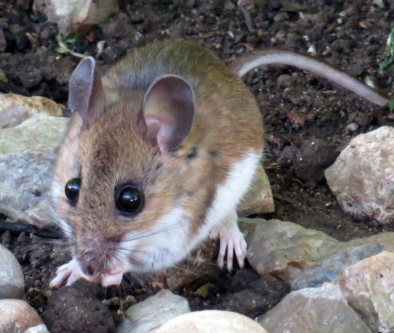 Colorado Department Of Public Health And Environment: Hantavirus Linked Death Confirmed